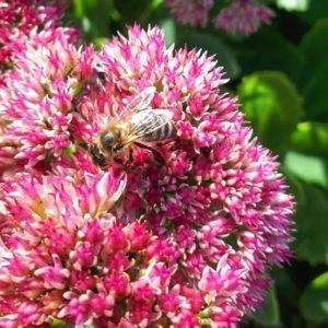 W powiecie limanowskim pomagamy pszczołom – kolejne dofinansowanie LOTu!