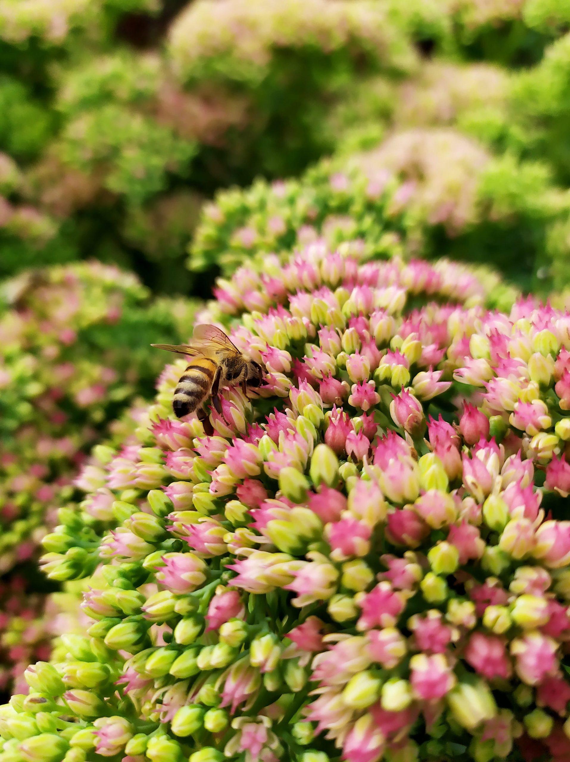 W jaki sposób możemy pomóc pszczołom?