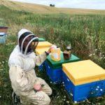 Zakończyliśmy cykl szkoleń w ramach I Powiatowej e-Konferencji Pszczelarskiej (materiały szkoleniowe)
