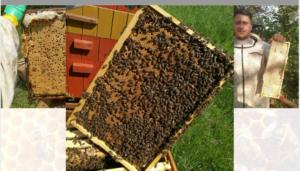 Połowa szkoleń w ramach I Powiatowej e-Konferencji Pszczelarskiej już za nami (materiały szkoleniowe)