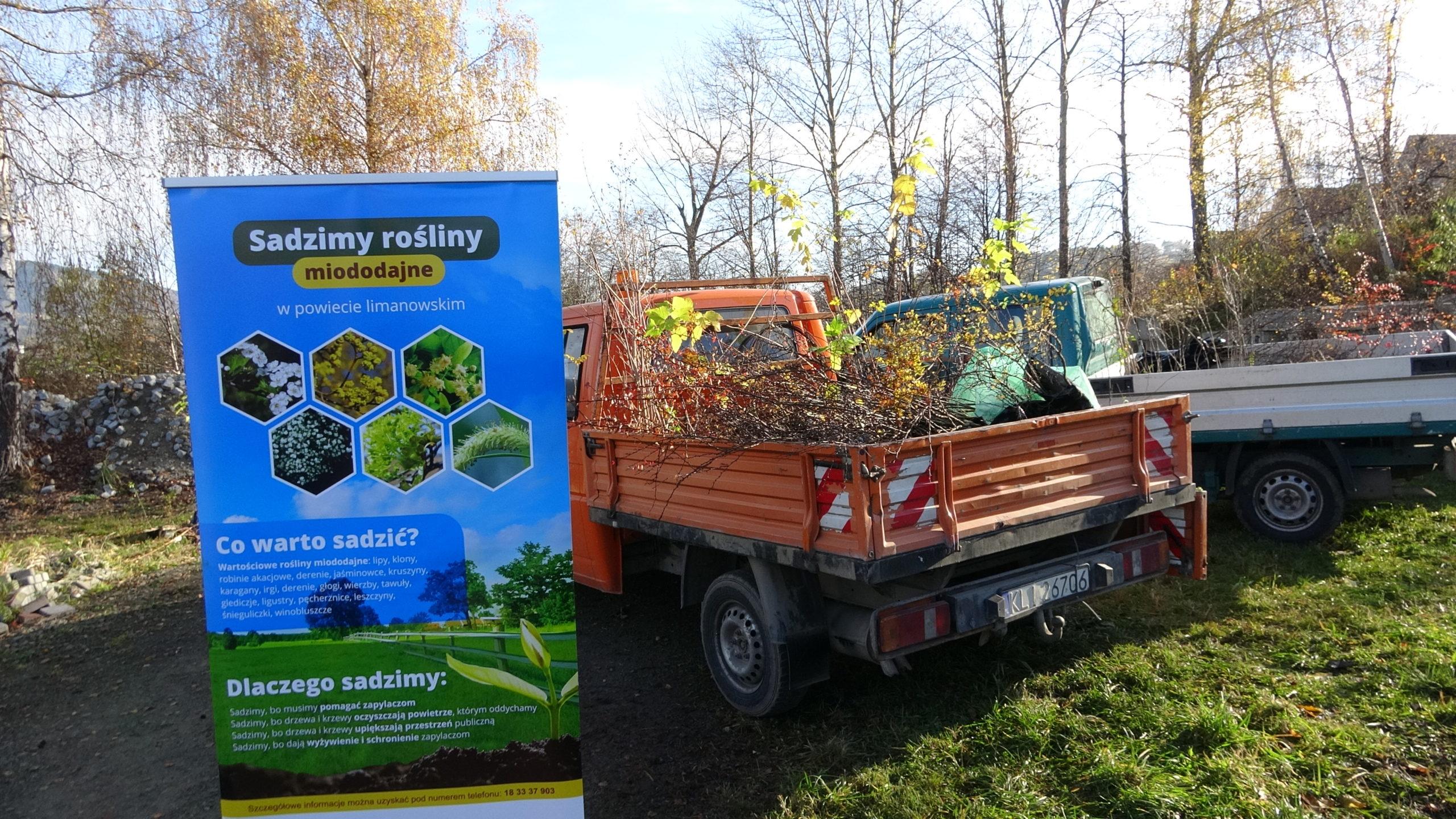 Samorządy sadzą rośliny otrzymane od Lokalnej Organizacji Turystycznej Powiatu Limanowskiego